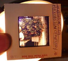 VINTAGE 1965 WASHINGTON ARLINGTON CEMETERY KODACHROME AMATEUR KODAK PHOTO SLIDE
