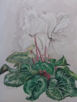 WATERCOLOUR STUDY OF A PLANT ARTIST CAROLYN STEEL FREE SHIPPING TO ENGLAND