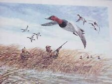 remington canvasback duck     hunting picture framed and ready for the wall