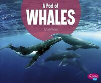 Pod of Whales, Paperback by Raatma, Lucia, Brand New, Free shipping in the US