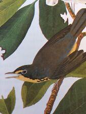 Canada Warbler Audubon Bird Print Picture Poster Bookplate