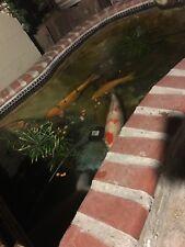 koi fish live