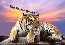 Lovely Tiger Picture Poster Home Art Print / Wall Decor New