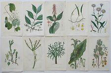 10 Genuine Curtis Botanical Engravings Prints Dates 1815 - 1832 (c30)