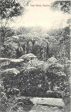 POSTCARD   CEYLON     Tree   Ferns