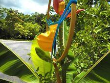 Men,s G String Well Endowed SUPER HERO Color, Trim & Back Choice Ask for color