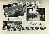 Cartolina Saluti da Borgosesia, panorama e margherite - Vercelli