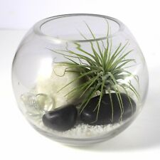 Air plant Kit in glass Terrarium With black and white theme | kit4