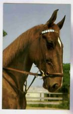 SADDLEBRED HORSE HEAD PROFILE BY ALFRED MAINZER,FAMOUS ANIMAL PHOTOGRAPHER POSTC