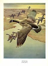 "1957 Vintage FRANCIS LEE JAQUES ""CANADA GOOSE"" LOVELY Color HUNTING Lithograph"