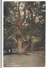 Hampshire; King Oak, Lyndhurst, New Forest PPC, 1906 PMK, By Howard Of Lyndhurst