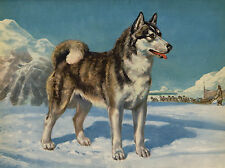 SIBERIAN HUSKY SLED DOG STANDING IN SNOW SCENE LOVELY GREETINGS NOTE CARD