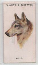 Wolf Canis lupus c85 Y/O Trade Advertising Card
