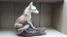 Tierpräparat Fuchs