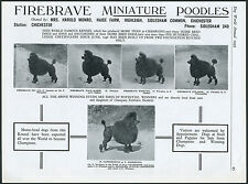 MINIATURE POODLE DOG WORLD VINTAGE 1955 BREED KENNEL ADVERT PRINT PAGE