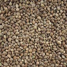 Bulk Buy Hemp Seed 15 Kg For Wild Bird Feed & Fishing Bait
