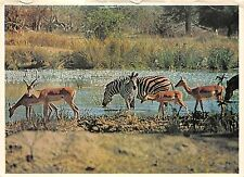 B36765 Animals Animaux Zebra Zebre and Impala south africa