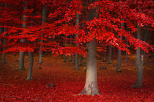 9X6FT Fall Forest Red Trees Scenic Polyester Studio Backdrop Photo Background LB