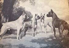 Vintage Boxer Dogs Richard Kettles Dorick Kennels George Ford Morris 1952 Print