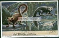 Aye - Aye Ruffed Lemur Monkey Ape Primate 60+ Y/O Trade Ad Card