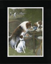 ROUGH COLLIE TERRIER AND CAT STEAL TENNIS TEA OLD STYLE DOG PRINT READY MATTED