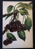 Still-Life~Cherries on Branch~ Fruit~Antique  Greeting Postcard-Unused-a915