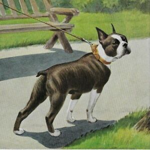 Boston Terrier - Vintage Color Dog Art Print - MATTED