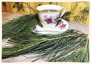 WHITE PINE NEEDLE Loose Leaf Tea~Oils~1/4 Lb Bundle~Organic Freshly Harvested PA
