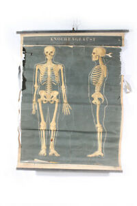 Wall Chart Roll Chart Card Knochengerüst Skeleton Vintage Man Body