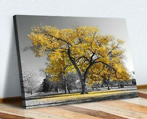 Large Tree Yellow Leaves Black White Canvas Wall Art Picture Print 30mm Deep
