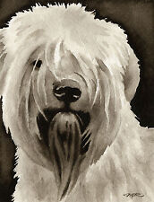 Soft Coated Wheaten Terrier Watercolor Art Print Signed by Artist Djr