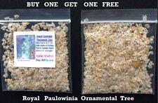 BUY 1 GET 1 FREE ~ ROYAL PAULOWINA TREE SEEDS ~  500 + SEEDS 4 U