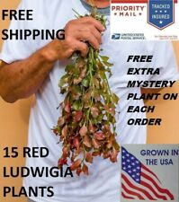 15 Ludwigia Repens Red Fresh Live Aquarium Plants Bunch Freshwater BUY2GET1FREE*