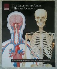 """The Illustrated Atlas of Human Anatomy (Second Edition 2007, Paperback 14""""x11)"""