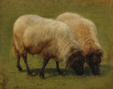 Bonheur Rosa Two Black Face Sheep Grazing Canvas 16 x 20  #5622