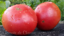 10 graines de tomate bio rare La Surprise d'André excellente! heirloom tomato