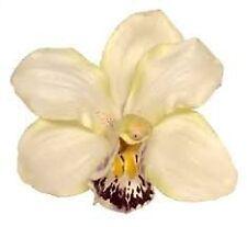 Orchid Flower Hair Clip Bridal Hawaii Party Girl (Cream)