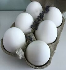 6 x Blown Blank White Duck Eggs, ideal for Fabergé, pysanky and Easter crafting