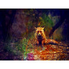 PHOTO PAINTING ANIMAL LONE FOX IN A FOREST 12 X 16 INCH ART PRINT POSTER HP2515