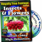Insects Flowers HD Royalty Free Stock Footage, Personal