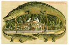 Alligator Border Florida Key West 663 A Residence Embowered in Coconut Trees