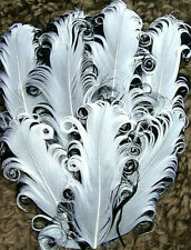 White on Black Goose Nagorie Feathers, Feather Pad     US Seller
