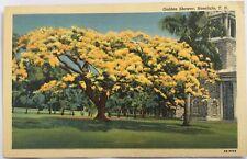 Shower tree in front of church Honolulu Hawaiian Islands postcard cir. 1940's