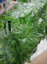 Fresh Neem Leaves 3 x100g packet for Acne , Skin Care , medical use P&P UK