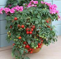 Vegetable Seeds - Tomato - Tumbling Tom Red - 10 Seeds