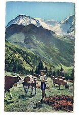 petit berger  alpage dans le pays du mont-blanc