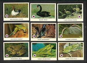 SCANLENS ANIMALS OF AUSTRALIA  NEAR SET 54/67