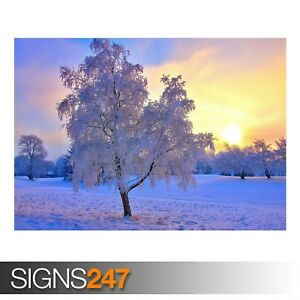 WINTER EVENING LIGHT (AE049) NATURE POSTER - Photo Poster Print Art * All Sizes