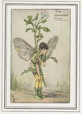 CICELY MARY BARKER c1930 THE GROUNDSEL FAIRY Painting Vintage Art Book Print