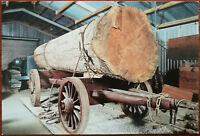 Bullock Wagon, The Otamatea Kauri and Pioneer Museum, New Zealand Post Card